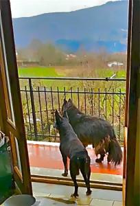 La mattina dal balcone